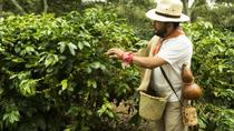 Enjoy the coffee trails in Coatepec Magical Town, Veracruz, Coffee & Tea Tours