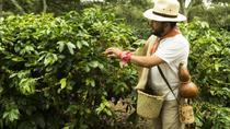Enjoy the coffee trails in Coatepec Magical Town, Veracruz, Coffee & Tea Tours