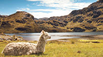 Private Day Tour to Cajas National Park from Cuenca, Cuenca, Private Sightseeing Tours
