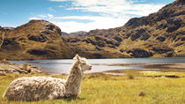 Private Tagestour zum Cajas Nationalpark von Cuenca, Cuenca, Private Touren
