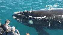 Whale Watching Cruise from Augusta, Western Australia, Dolphin & Whale Watching