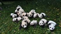 One day as Volunteer: Big Panda in Sichuan, Chengdu, Volunteer Tours