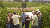 Wine Cellar Visit and Tasting in La Rioja, La Rioja, Wine Tasting & Winery Tours