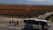 Mendoza Hop-On Hop-Off Wine Tour, Mendoza, null