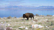 Antelope Island Tour, Salt Lake City, Nature & Wildlife