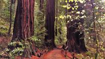 Private Full-Day Muir Woods and Wine Country Tour From San Francisco, San Francisco, Half-day Tours