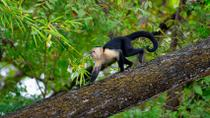 Costa Rican Wildlife in Palo Verde National Park, Guanacaste and Northwest, Day Trips