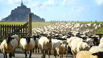 Private Walking Tour of Mont Saint Michel and Surroundings, Mont-St-Michel, Private Sightseeing...