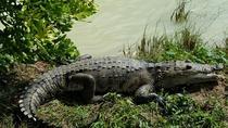 Crocodile Encounter & ZipRio (zipline), Belize City, 4WD, ATV & Off-Road Tours