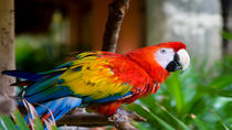 Excursion en bord de mer de Belize : zoo de Belize, Belize City