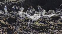 Isla de Chiloé: Ancud - Puñihuil, Puerto Varas, Day Trips