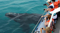 Marine Big 5 Safari from Gansbaai, Hermanus, Dolphin & Whale Watching