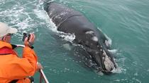 Marine Big 5 Safari from Hermanus, Hermanus, Day Cruises