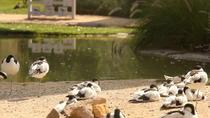 Arabian Wildlife Center Entrance Ticket, Sharjah, Theme Park Tickets & Tours