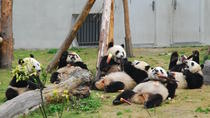 1 Day Customised Tour to Wolong Panda Base (Optional baby Panda holding and volunteering), Chengdu, ...