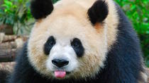 Private Custom Tour: Chengdu in a Day, Chengdu, Private Sightseeing Tours