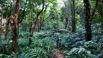 3-Hour Jungle Trekking in Ngapali, Ngapali, Climbing