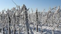 Private Niagara-on-the-Lake Ice Wine Festival Tour, Niagara Falls & Around, Wine Tasting & ...