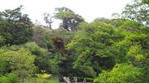 Curi Cancha Nature Reserve Admission Ticket , Monteverde, Eco Tours