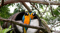 Caroni Bird Sanctuary, Trinidad, Nature & Wildlife