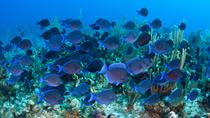 Glass Bottom Boat Cruise at Buccoo Reef, Tobago, Glass Bottom Boat Tours