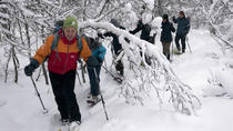 Guided Snowshoe Walk on Tromsoya Island in Tromso, Tromso, Ski & Snow