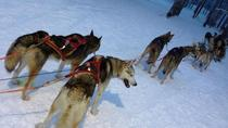 Ruka Snowmobile Adventure with Husky Farm Visit and Husky Sled Ride, Lapland, Ski & Snow