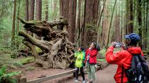 Sonoma Redwoods Hiking Tour, Santa Rosa, Hiking & Camping