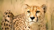 Cheetah and Penguin colony and wine tour via the Whale Route, Cape Town, Wine Tasting & Winery Tours