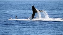 Full Day Whale Watching Tour in Hermanus from Cape Town, Cape Town, Dolphin & Whale Watching