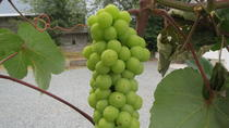 The Fraser Valley Winery Tour, Vancouver, Wine Tasting & Winery Tours