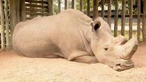 2 Days - 1 Night Olpajeta safari, Nairobi, Private Sightseeing Tours