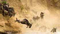 3 Days Masai Mara Safari, Nairobi, Multi-day Tours