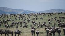 3 Days Masai Mara Safari, Nairobi, Multi-day Tours
