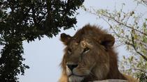5 Days Amazing Wildlife Safari, Nairobi, Multi-day Tours
