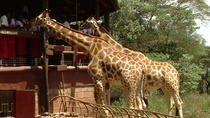 Nairobi National Park,David Shedrick,Carnivore lunch&Giraffe centre Private tour, Nairobi, ...