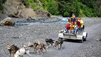 Wilderness Dog Sled Ride and Tour, Seward, Ski & Snow