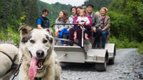 Wilderness Dog Sled Ride and Tour, Seward, Day Cruises