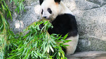 Half-day Private tour of Chongqing Zoo with Transfer to Chongqing Airport, Chongqing, Private ...