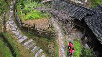 Private Day Tour Of JinKeng Rice Terraces With Dazhai And Yao Minority Villages And Sanjie Liu Tea ...