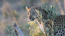 1night 2days Express Kruger National Park Safaris, Johannesburg, Attraction Tickets
