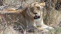 3 Days Kruger National Park Overnight Safaris, Johannesburg, Multi-day Tours