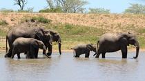 3 Days Kruger National Park Overnight Safaris, Kruger National Park, Multi-day Tours