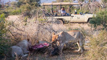 3days THAKADU RIVER CAMP, Madikwe Game Reserve, Johannesburg, Private Sightseeing Tours
