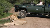 3nights-4days Tau Game Lodge-Madikwe Game Reserve from Johannesburg or Pretoria, Johannesburg,...
