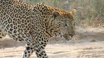 4Days Kruger National Park Overnight Safaris, Johannesburg, Multi-day Tours
