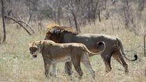 4days Lukimbi Safari Lodge - Kruger National Park from Johannesberg, Johannesburg, null