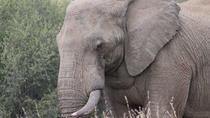 Full-Day Pilanesberg National Park Safari from Johannesburg, Johannesburg, Safaris