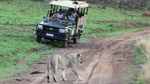 Ivory Tree Game Lodge 3days overnight safaris - Pilanesberg National Park, Johannesburg, Multi-day...