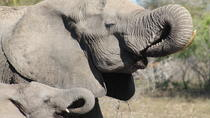 Kruger National Park Full Day Private Guided Safaris, Kruger National Park, Safaris
